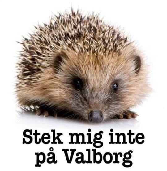 igelkott_valborg